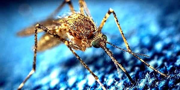каких растений боятся комары