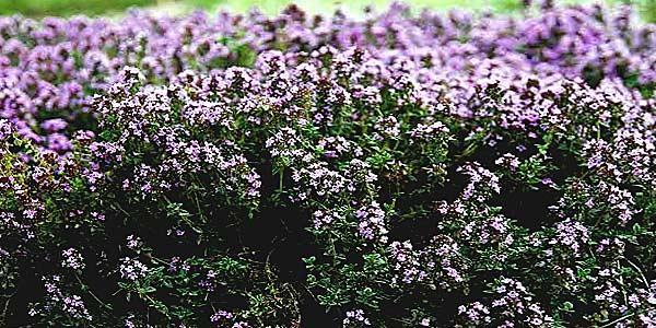 Целебные растения фото