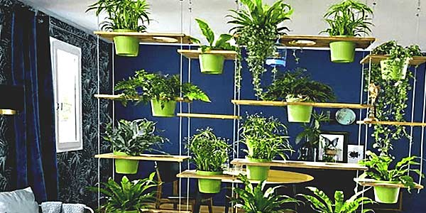 Квартира — место для растений фото